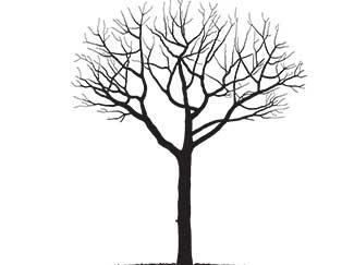 dormant-tree
