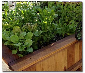 garden-bed1