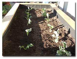 garden-bed13