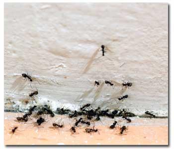 getting-rid-ants