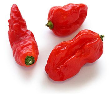 ghost-pepper