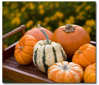 pumpkin-gourds
