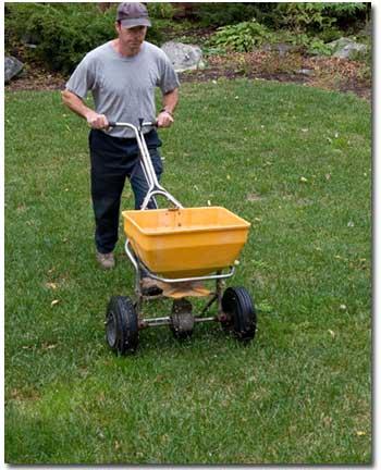 reseeding-lawn