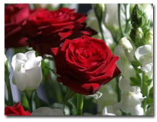 rose-care