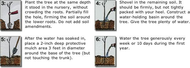treeplanting-2