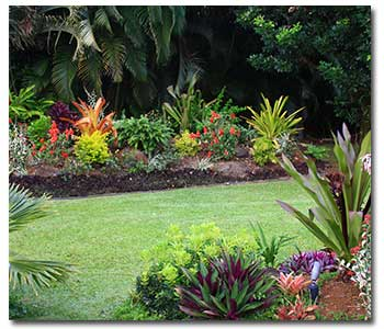 Grangettos Farm and Garden Supply Services Tropical Paradise